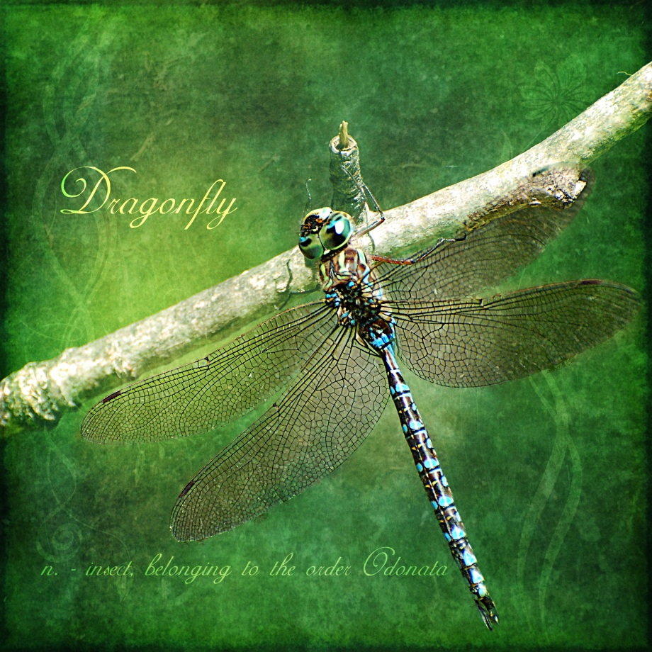 Dragonfly portrait by Heather Hinam