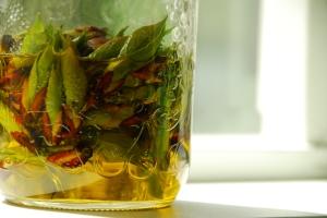 Balsam poplar buds in oil