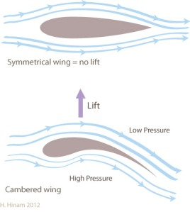 Diagram explaining how cambered wings create lift