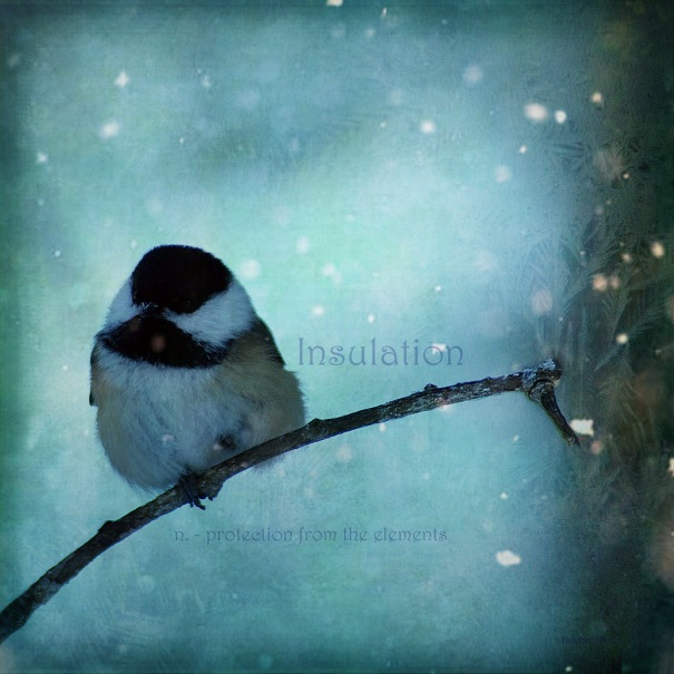 Insulation - chickadee warming its feet