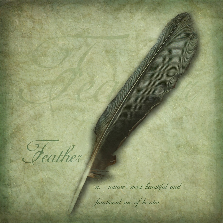 Feather by Heather Hinam